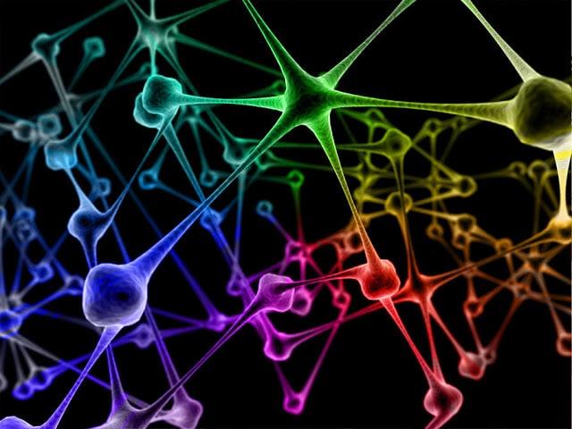 الشبكات العصبية